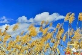秋天思绪随着云卷云舒,浪漫舒缓的手风琴曲《玛奇朵飘浮》欣赏
