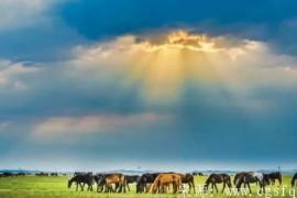 王迟手风琴与乐队新作——《阳光照耀着塔什库尔干》欣赏