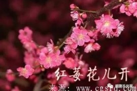 王迟改编手风琴二重奏《红莓花儿开》曲谱下载